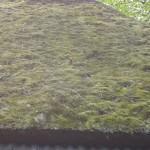Zeer vervuild dak door mosgroei
